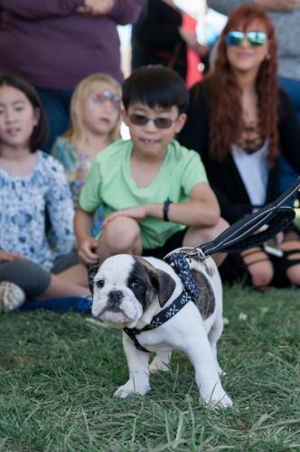 bulldog day 2017 (22)