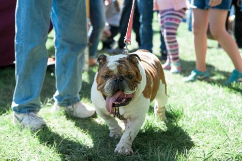 bulldog day 2017 (56)