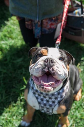 bulldog day 2017 (66)