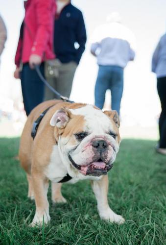 bulldog day 2017 (68)