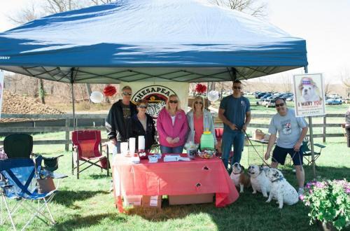 bulldog day 2017 (82)